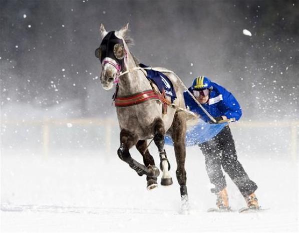 Cavallo traino