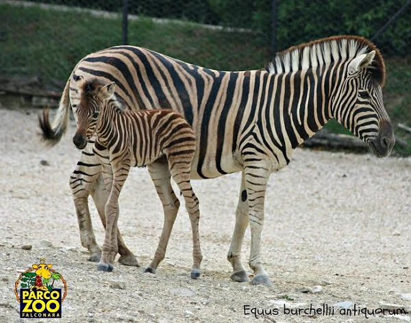 parco zoo4