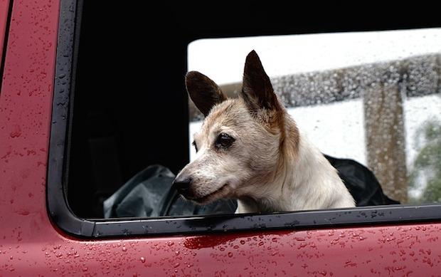 viaggiare con animali in auto
