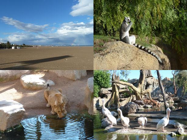 Valencia in tre giorni - Bioparc