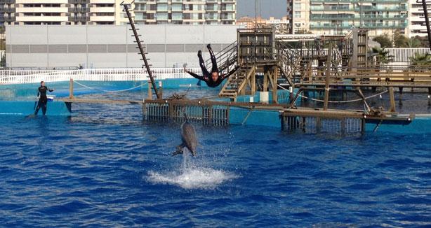 Valencia - delfini all'Oceanografic