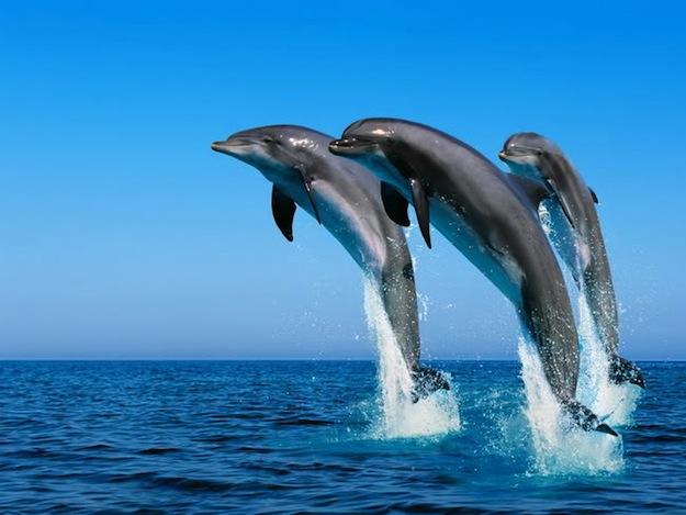 dove nuotare coi delfini