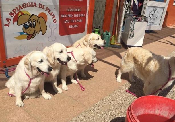 Spiagge per cani a Bibione e Lignano