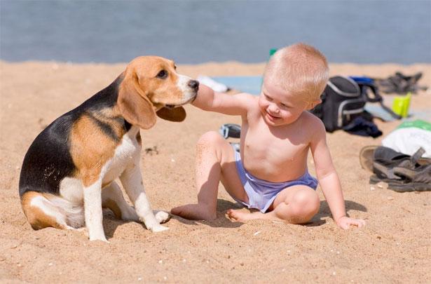 spiaggia per cani a Bibione e Lignano