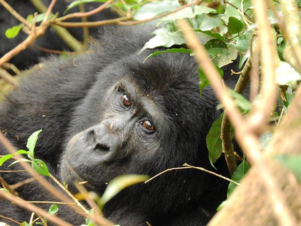 Viaggi in Uganda personalizzati