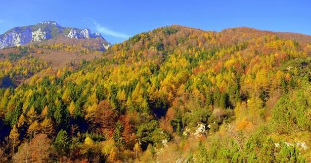 Vacanze nei boschi in Italia