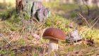 Andare a funghi