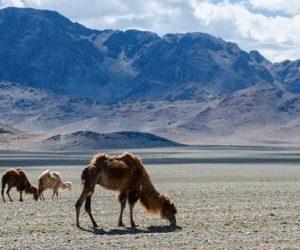 Viaggio in Mongolia