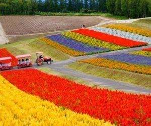 Hokkaido Giappone