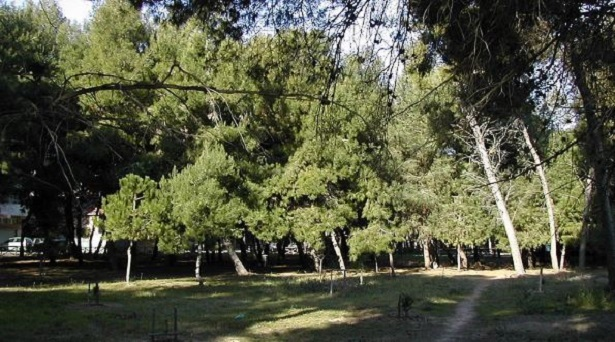 Riserva naturale Pineta di Santa Filomena