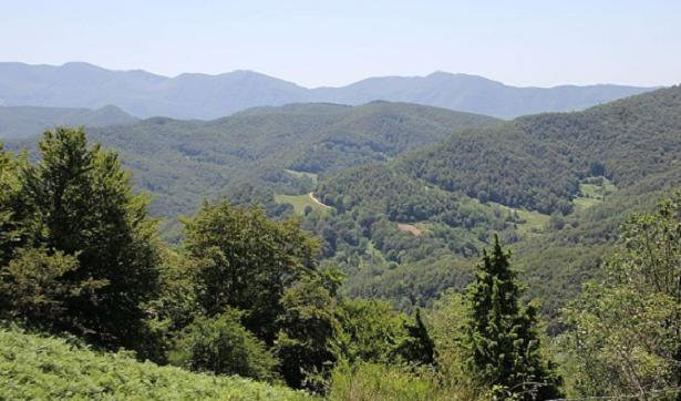 Cosa vedere nelle Foreste Casentinesi